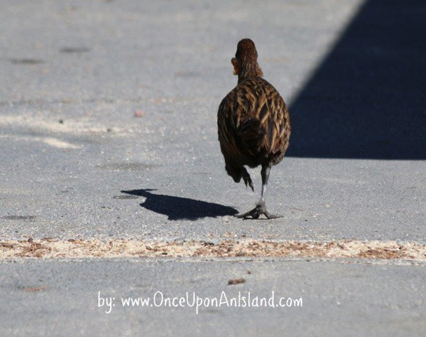 Weka on the run
